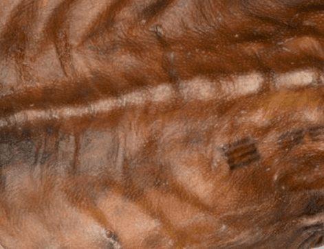 Ötzi'nin Dövmesi