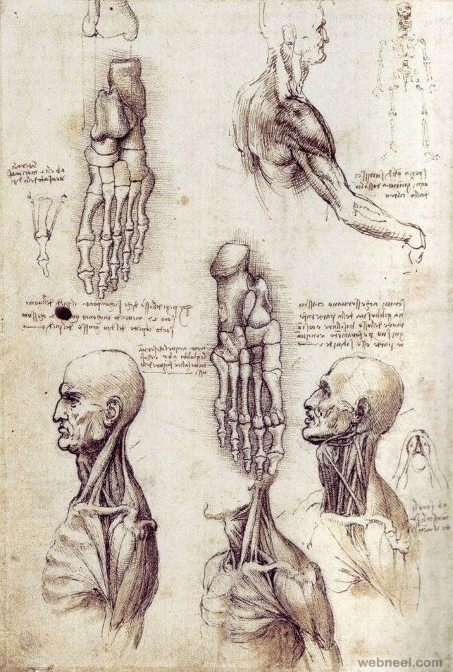 da vinci - anatomy