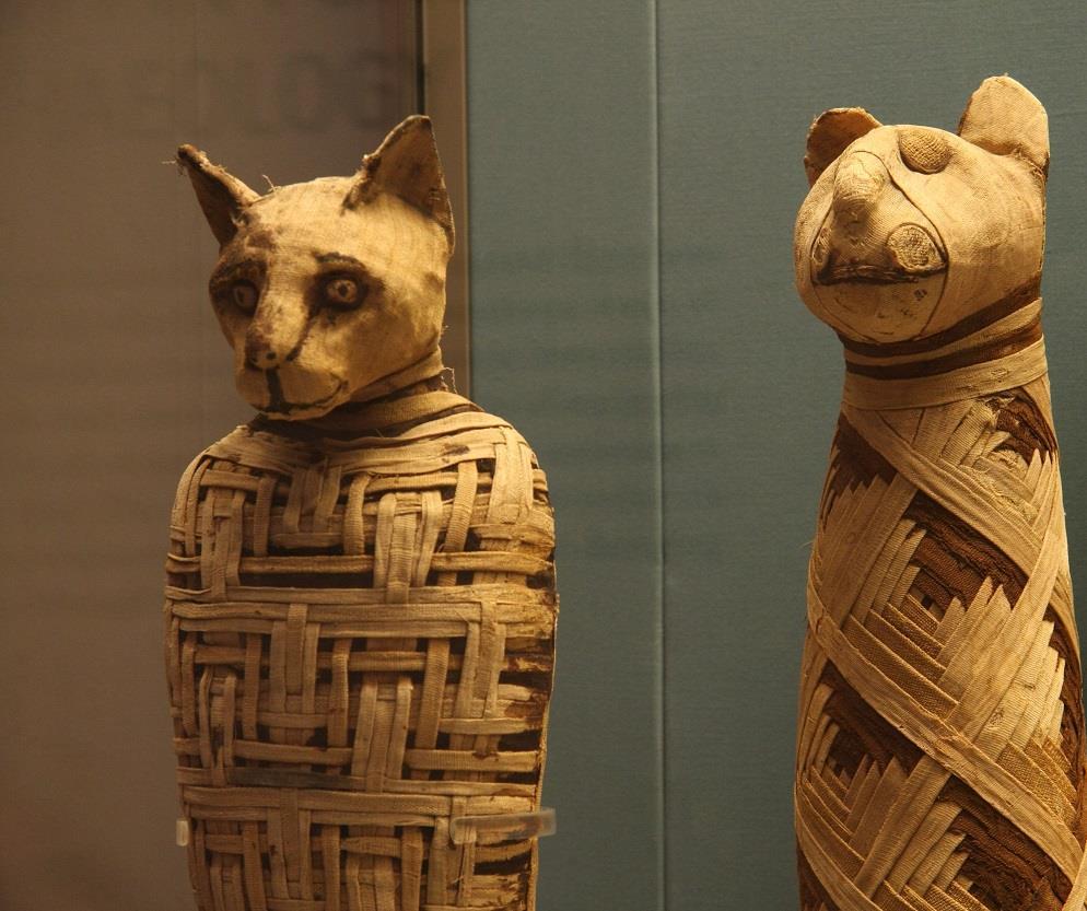 mumya kediler