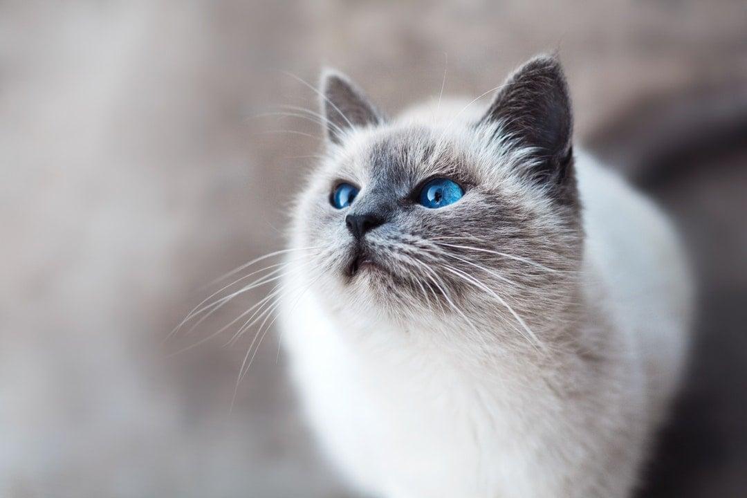 sanatta kediler